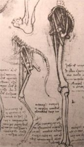 drawing-of-the-comparative-anatomy-of-the-legs-of-a-man-and-a-dog.jpg!Blog