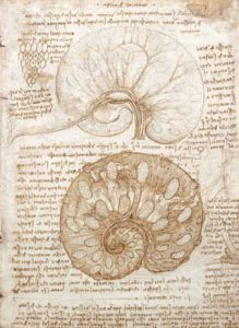drawing-of-the-uterus-of-a-pregnant-cow-1508
